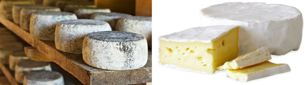 brie with and without black mold