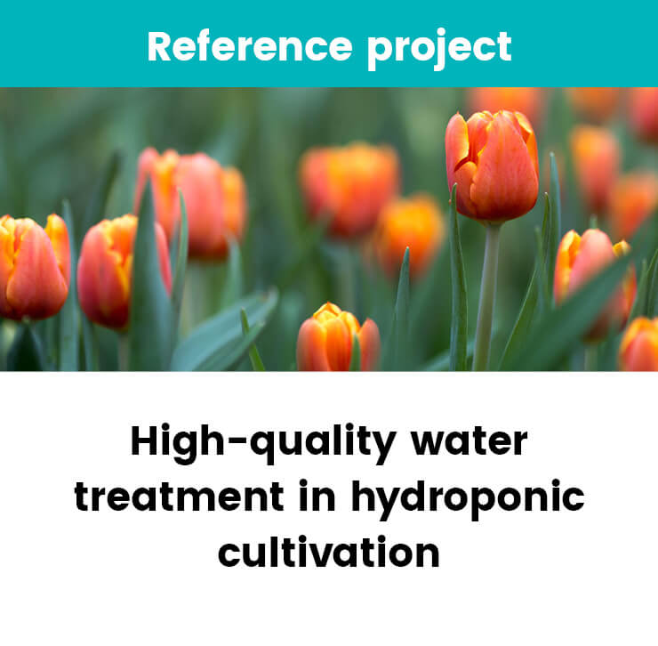 High-quality water treatment in hydroponic cultivation